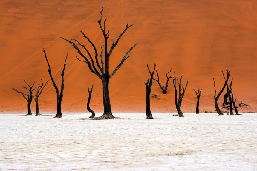 dead_tree_deadvlei_deadvlei_sossusvlei_dead_trees_salt_pan_sand_dune_desert_silhoutte_namibia_africa_namib_desert