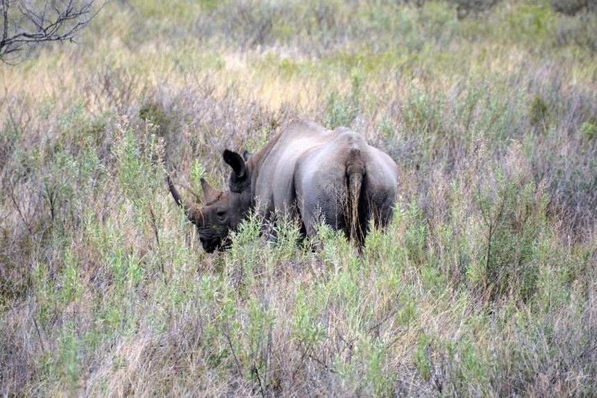 etosha_national_park_namibia_africa_RHINO